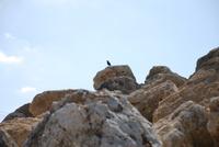岩に一匹の鳥