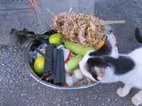 ウークイで供え物を門口に置き、猫が食べようとしてる様子 2011