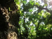 森から空を見上げる図 2011/11/23