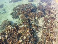 備瀬の海の礁池
