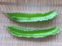 うりずん豆2本 ザル盛り2014