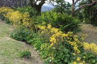 ツワブキの花とゲットウ2014