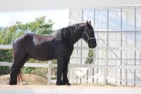 黒い馬2015