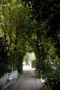 備瀬の福木並木 縦