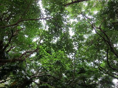 木に覆われた空