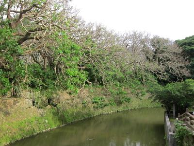 龍潭池の端