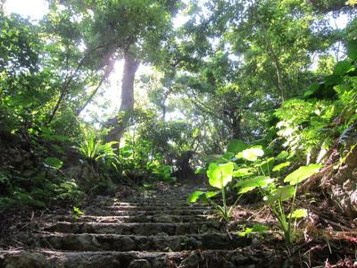 石積みの階段と草木