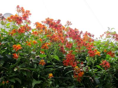 花の生け垣2012