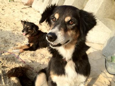 ビーチにいる かわいい犬二匹