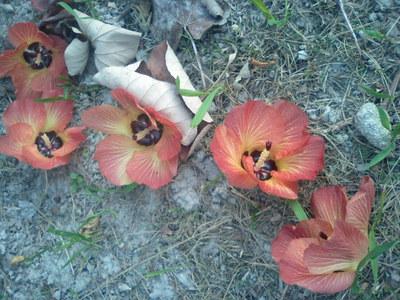 落ちたユウナの花2014