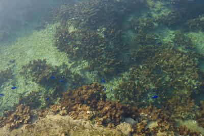少しグリーンがかった備瀬崎の澄んだ海