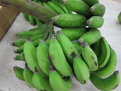 まだ青い島バナナ