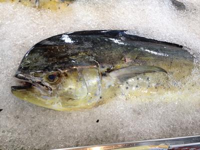 魚市場に並ぶシイラ