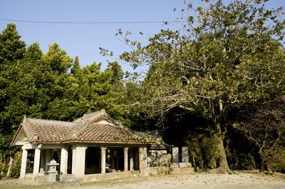 備瀬の福木並木と赤瓦