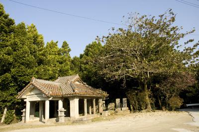 備瀬の福木並木と赤瓦2