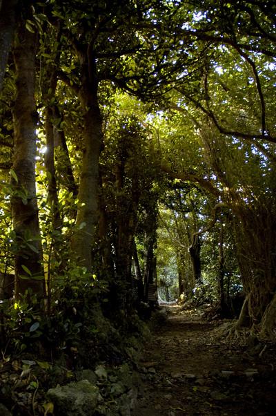 空まで覆われた備瀬の福木並木